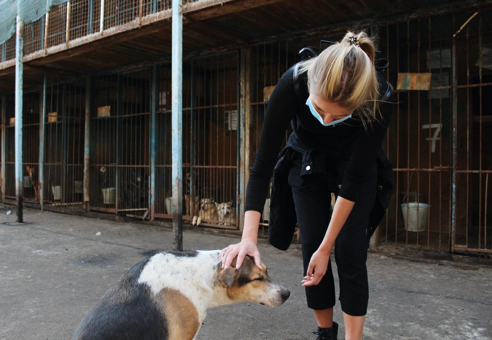 Активисты Молодежной палаты Теплого Стана доставили в приют для собак корм и одежду